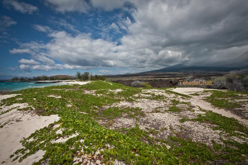 volcanique_plage_grande_ile_hawai_8