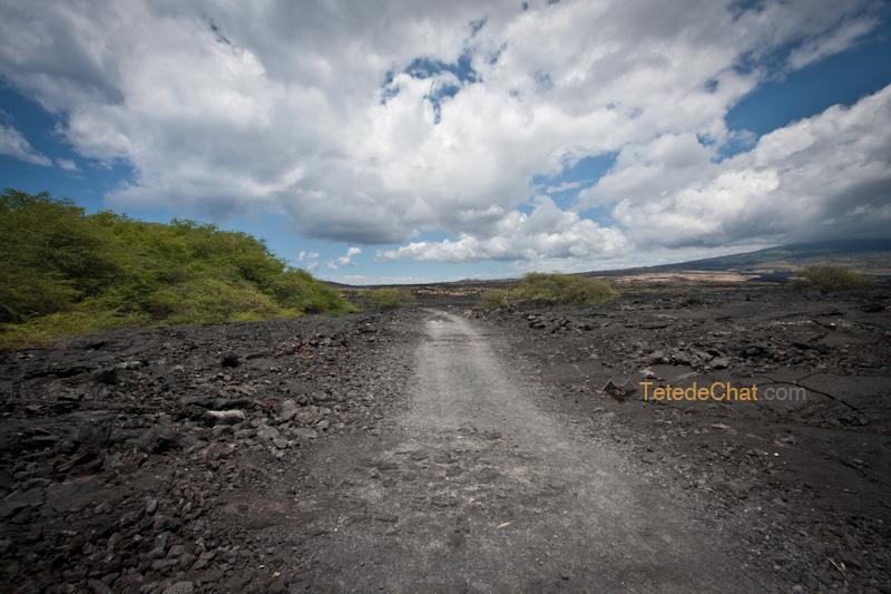volcanique_plage_grande_ile_hawai_chemin