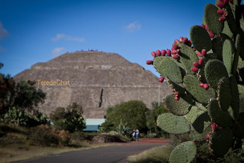 figue_barbarie_pyramide_soleil_Teotihuacan