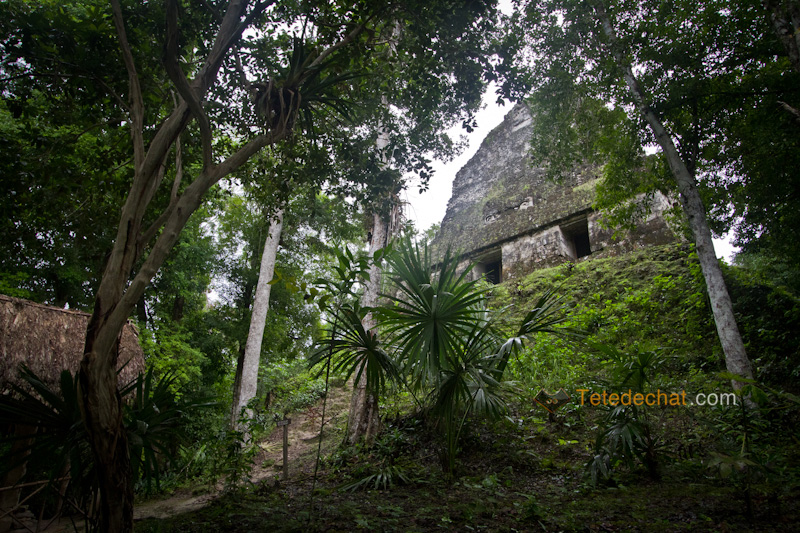 tikal_jungle_pyramide