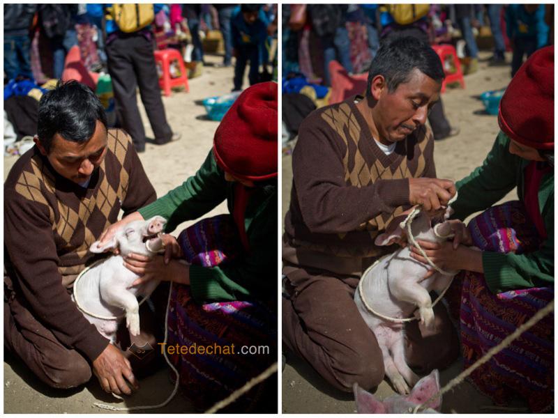 San_Francisco_El_Alto_marche_cochon