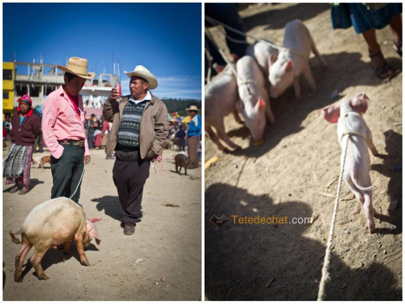 San_Francisco_El_Alto_marche_cochon_3