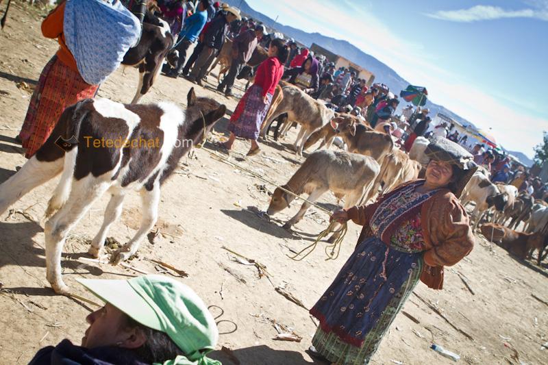 San_Francisco_El_Alto_marche_femme_vache