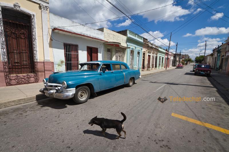 cienfuegos_voiture_chien