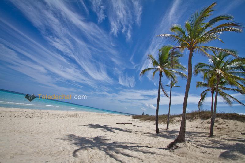 havane_playa_del_este_plage_palmiers