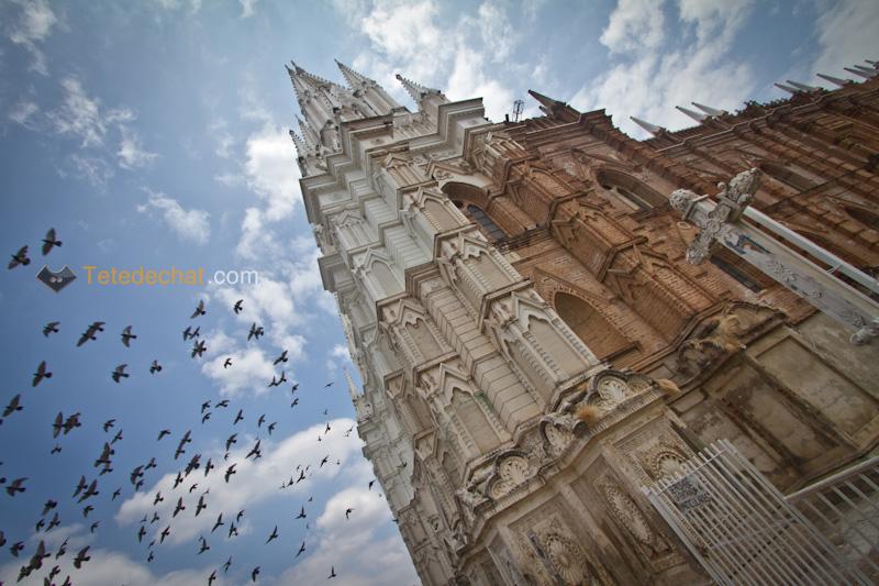 cathedral_santa_ana_el_salavador_pigeons