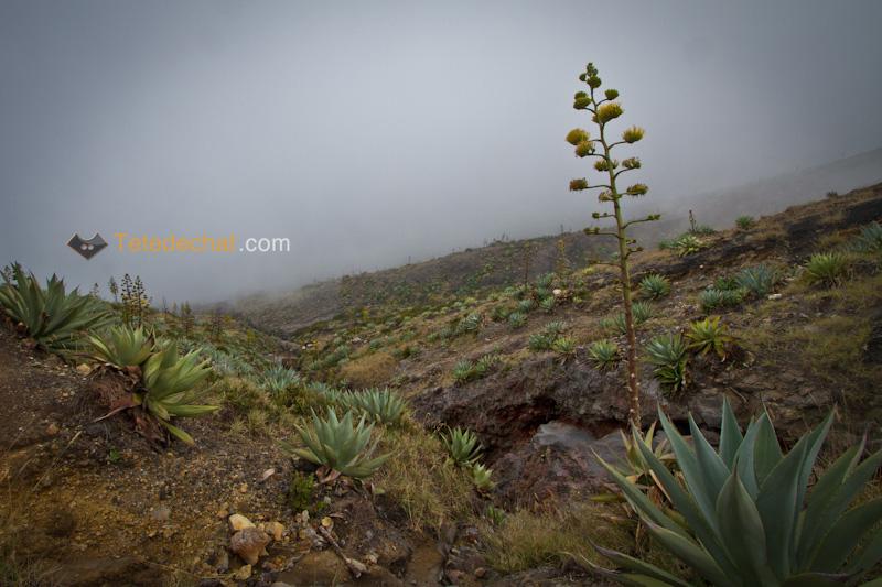 volcan_santa_ana_fleur