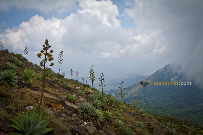 volcan_santa_ana_fleur_nature