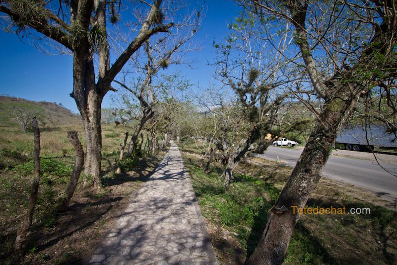 chemin_pour_ruines_copan