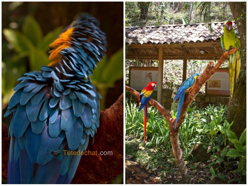 couleurs_perroquets_parc_oiseaux_copan