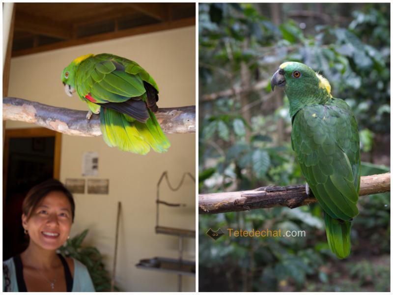 hihi_parc_oiseaux_copan