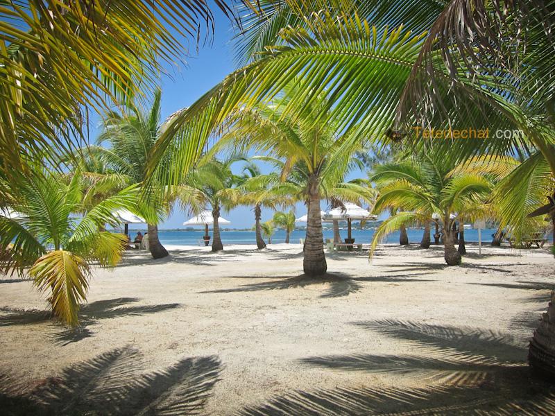palmiers_plage_payante_utila