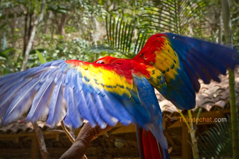 perroquet_ailes_derriere_parc_oiseaux_copan
