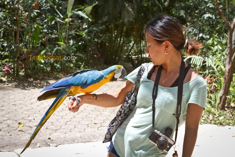 perroquet_mange_tshirt_hihi_parc_oiseaux_copan