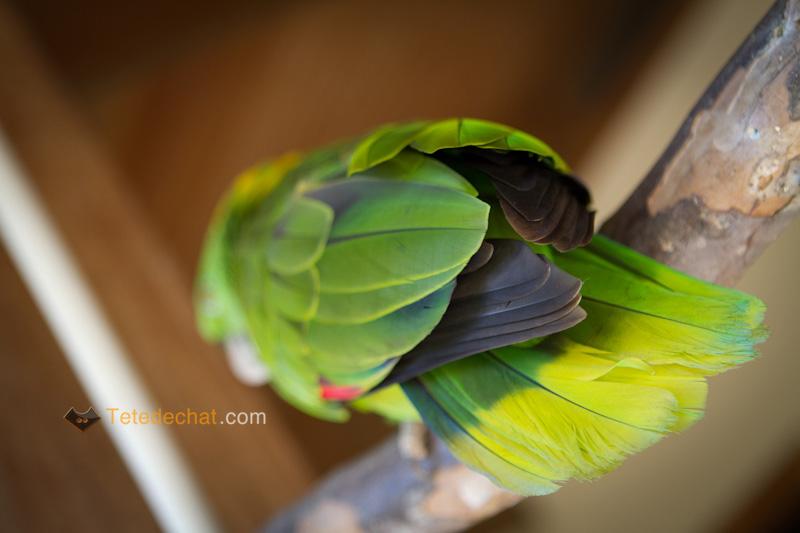 plume_oiseau_entree_parc_oiseaux_copan