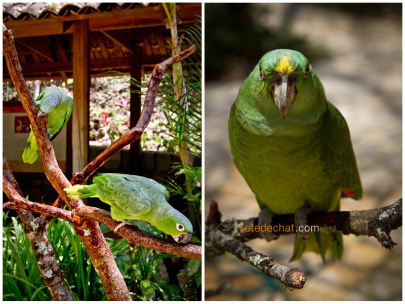vert_parc_oiseaux_copan