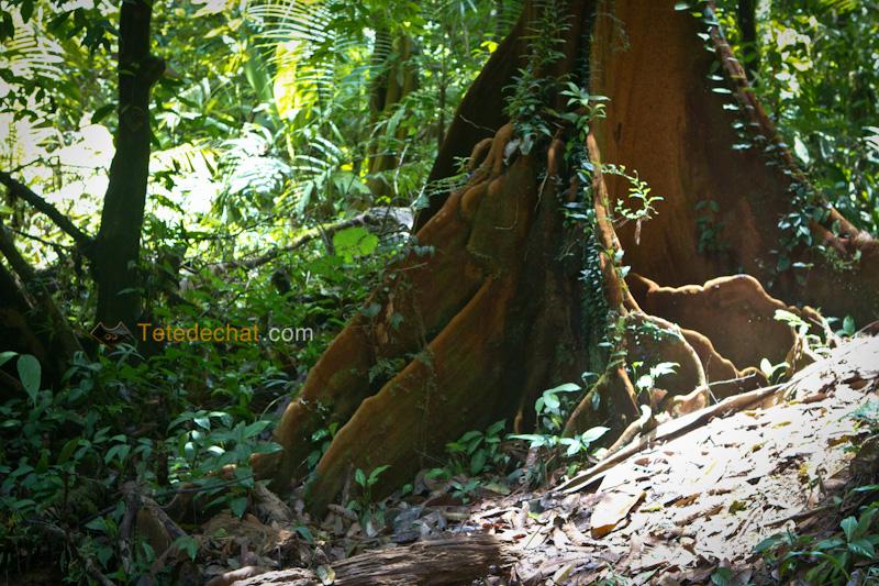 parc_piedras_blancas_costa_rica_arbre