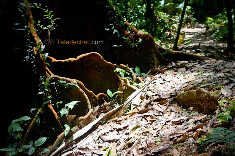 parc_piedras_blancas_costa_rica_arbre_2