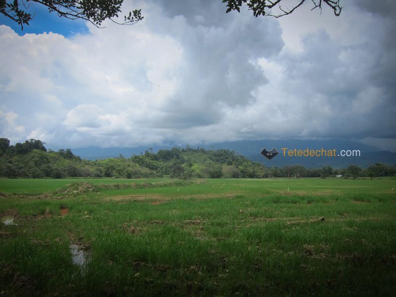 parc_piedras_blancas_costa_rica_fourmis_paysage