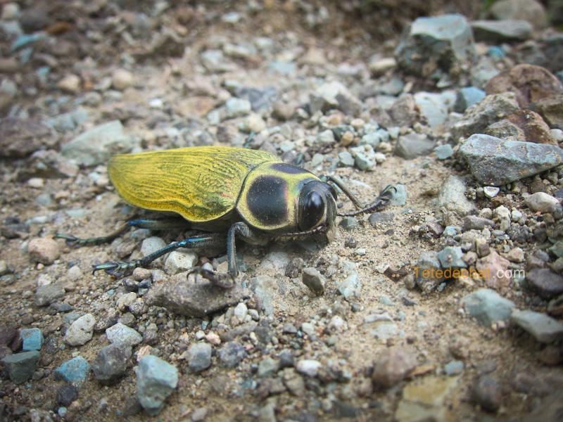 parc_piedras_blancas_costa_rica_insect