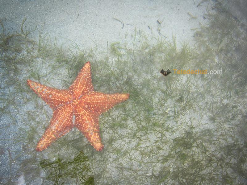playa_estrella_bocas_del_toro_etoile_de_mer