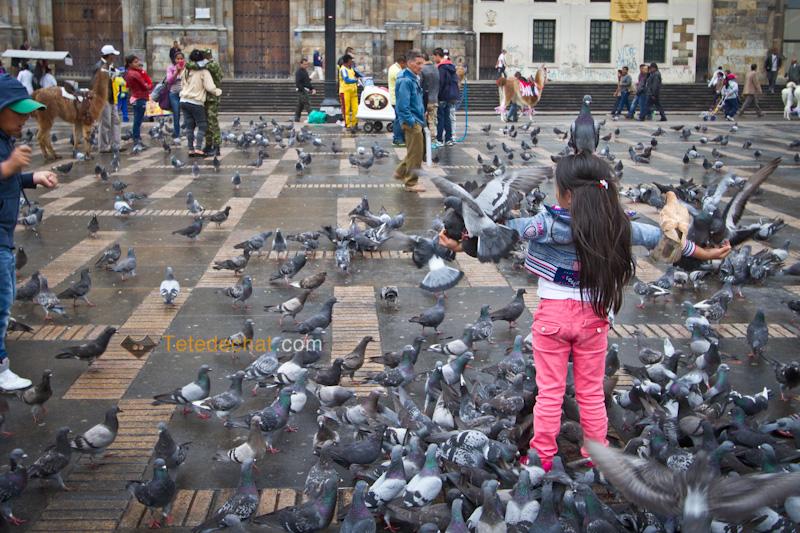 place_bolivar_pigeons_fille