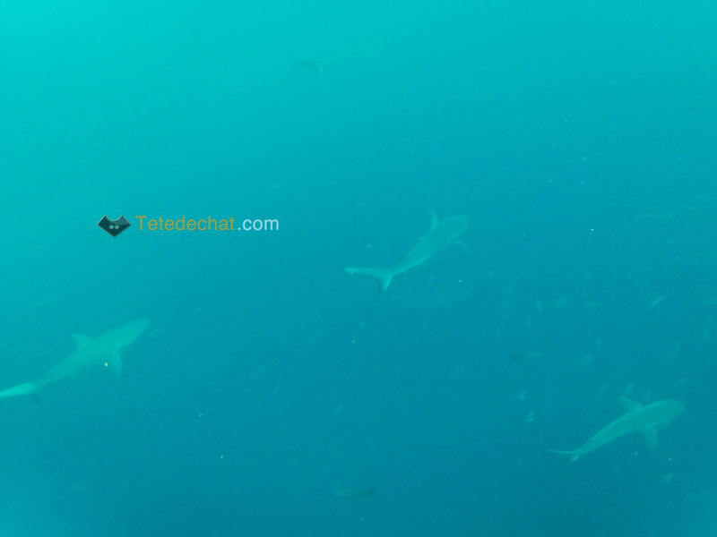 Kicker_Rock_Leon_Dormido_requins