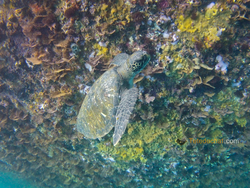 Kicker_Rock_Leon_Dormido_tortue