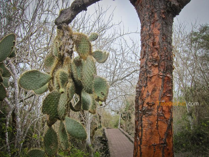 cactus_chemin_tortuga_baie