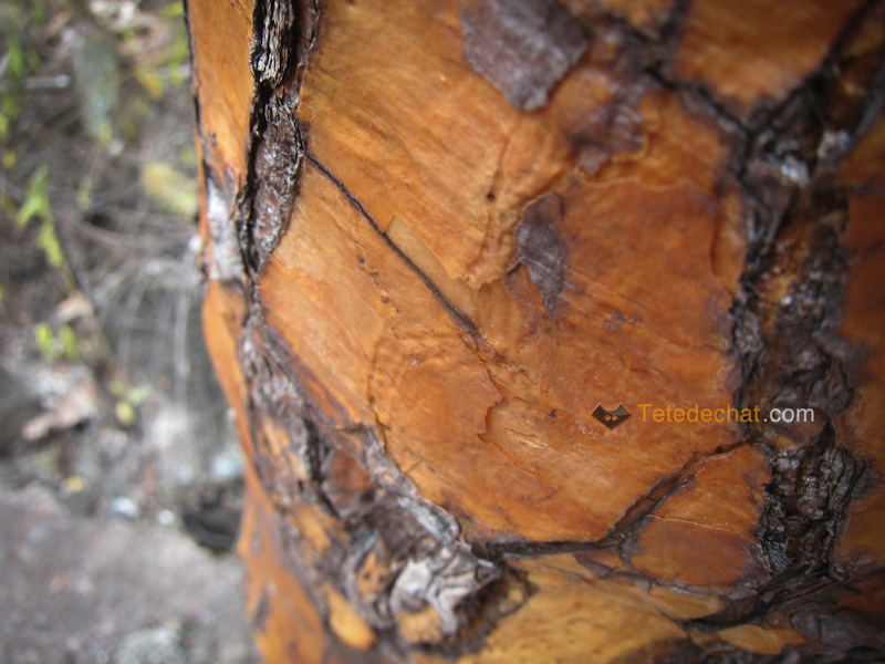 ecorce_arbre_cactus_santa_cruz