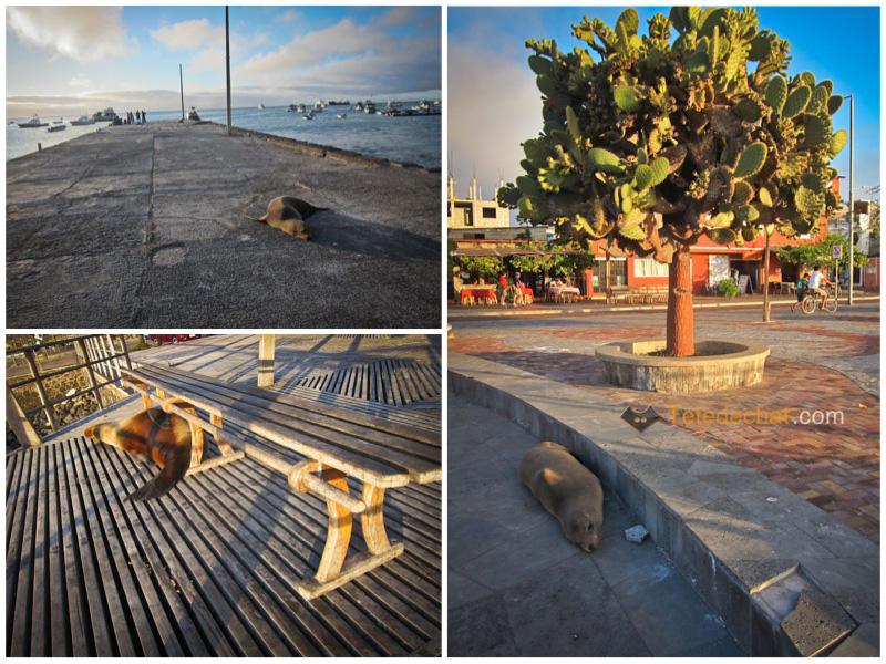 lion_de_mer_partout_galapagos