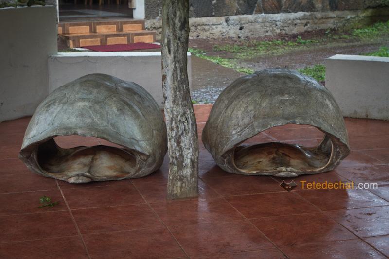 reserve_el_chato_tortue_geante_carapasses