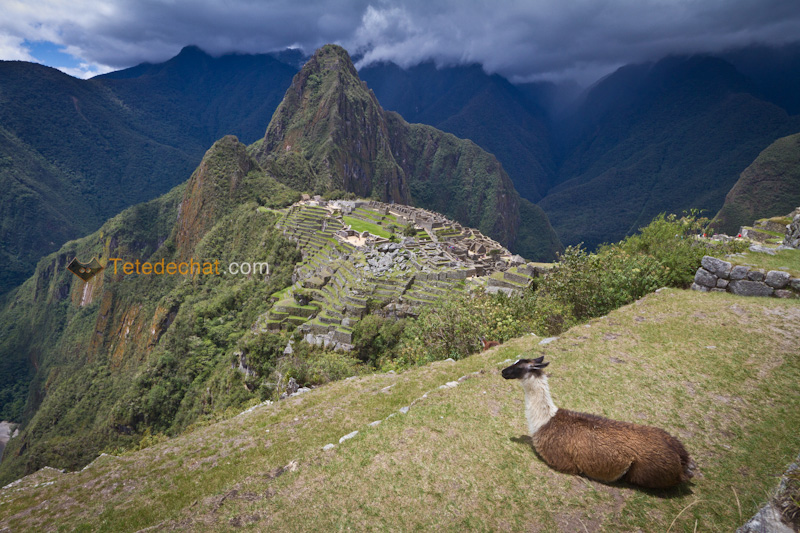 Le Machu Picchu + Tips