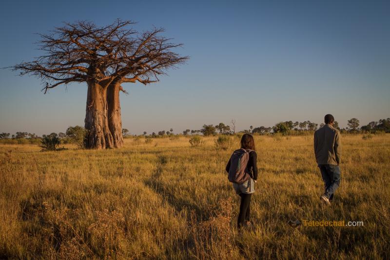 Le delta Okavango
