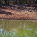 La réserve Marloth