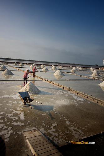 salt_farm