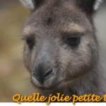Kangaroo island…