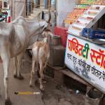 Le Rajasthan en été