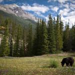 Entre Jasper et Banff