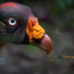 Le zoo du Belize