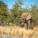 Le parc national Etosha (partie 2)
